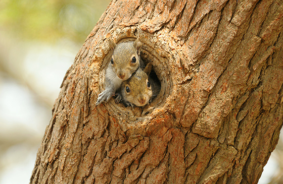 Excellent Nutty Squirrels Home Download Free Architecture Designs Photstoregrimeyleaguecom